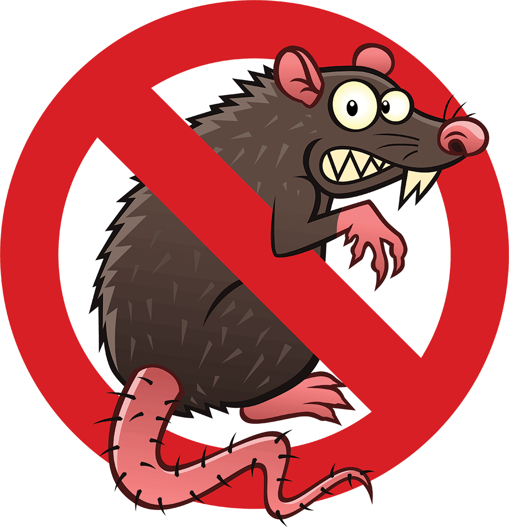 Stop Rat Infestations Image